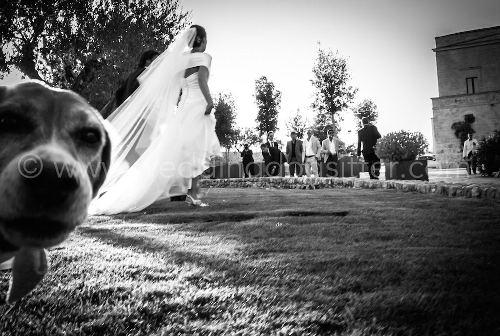 wedding dog sitter music planning musica matrimonio roma rieti lazio catelli romani, musica ricevimento roma, musica cerimonia roma, ALTAMURA