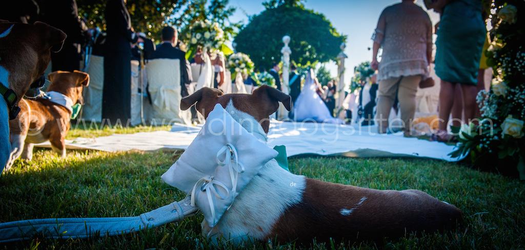 wedding dog sitter music planning musica matrimonio roma rieti lazio catelli romani, musica ricevimento roma, musica cerimonia roma VILLA FINISTERRE