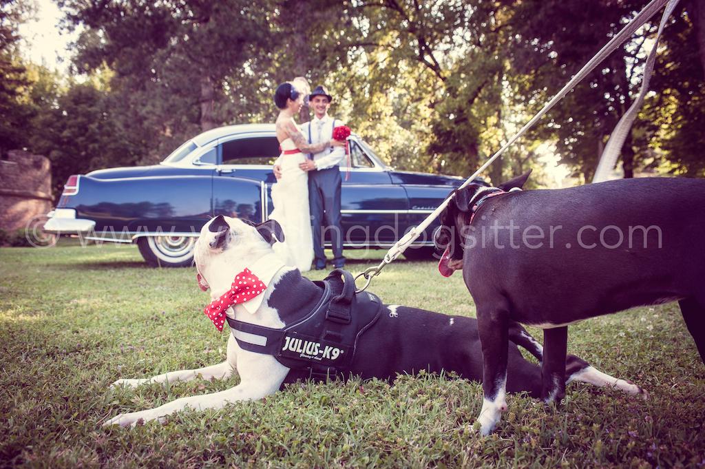 wedding dog sitter music planning musica matrimonio roma rieti lazio catelli romani, musica ricevimento roma, musica cerimonia roma